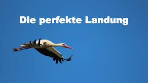 storch_perfekte landung_youtube